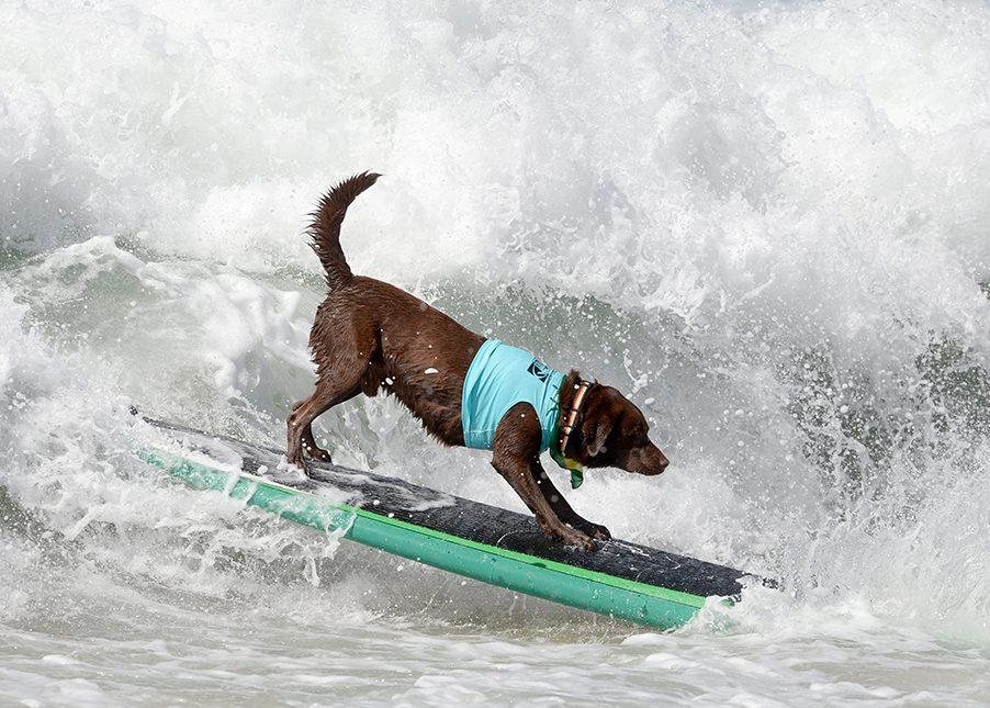 Surfender Hund, Video